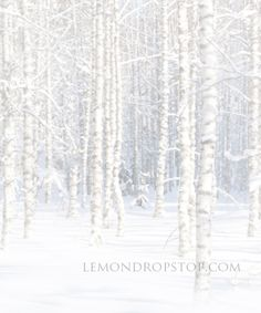 {I LOVE THIS!} LemonDrop Stop Birch Scene | Canvas Photography Backdrops | LemonDrop Stop Photography Backdrops and FloorDrops