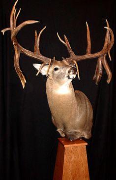 Wow!! Whitetail Deer Pictures, Deer Photos, Deer Pics, Deer Mounts, Fish Mounts, Big Whitetail Bucks, Alaska, Mule Deer Hunting, Hunting Magazines