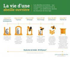 http://mbmextermination.com/wp-content/uploads/2015/08/Bees_Matter_Infographics_French-03-1024x854.jpg