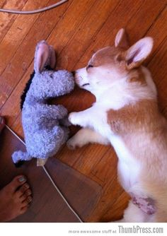 Is there anything cuter than a baby Corgi? We think not. #YourSmileOfTheDay