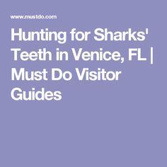 Hunting for Sharks' Teeth in Venice, FL | Must Do Visitor Guides
