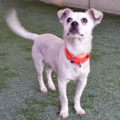 Prince Humperdinck is a sweet little10 month old terrier mix that has a displaced femoral fracture requiring surgery. https://www.petcaring.com/ThePRC_PrinceHumperdink
