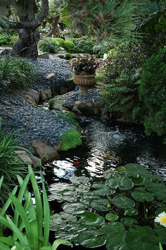 In the clear light, a Koi pond, lily pads, stones, flower pot, Meditation Garden - Encinitas, California, USA