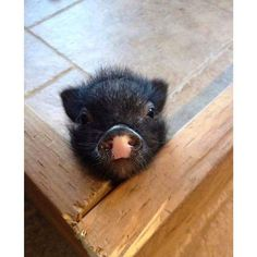 (couldn't help laughing at this cute little piggie!)