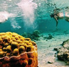 Also me and my happy place. Under the sea <3 #ROAMFREE #ONEILLWOMENS @ONEILLWOMENSUSA
