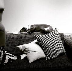 #ateliermartindhust #martindhust #martindust #leather #mtldesigner #mtlleather #leatherbags #italiangreyhound