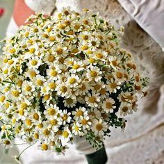 Morlotti Studio - Sweetness of the bride   Bouquet - White Daisy  #wedding #bouquet #calla #lilly #bride