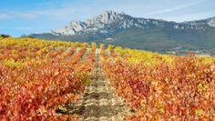 Blog OMG - I'm Engaged - Destino de lua de mel para amantes de vinho - La Rioja, na Espanha. Honeymoon.