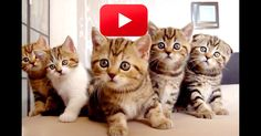 We Think We Found Your Morning Pick-Me-Up! Meet The Kitty Choir! | The Animal Rescue Site Blog