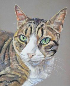 Portrait de chat tigré aux pastels secs