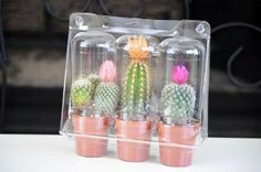 """9GreenBox - Live Set of 3 Cactus & Succulents bundle with Cover - Flower - Easy Gift - Indoor Bonsai by 9GreenBox. $7.99. Very Hard to find. You will receive 3 different cactus & Succulents in Plastic Cover to make it easy gifting.. 3 Beautiful and unique CACTUS & Succulents. Handmade by 9GreenBox. Easy to grow. Come with 2"""" containers with soil.  We're handmade this rare treasure! , The diameter of this plant is about over 4"""" inch tall in 2"""" containers with soil. ..."""