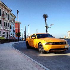 Mustang in beautiful surroundings