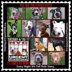 TO BE DESTROYED 04/18/17 - - Info    To rescue a Death Row Dog, Please read this:http://information.urgentpodr.org/adoption-info-and-list-of-rescues/   To view the full album, please click here: http://nycdogs.urgentpodr.org/tbd-dogs-page/ -  Click for info & Current Status: http://nycdogs.urgentpodr.org/to-be-destroyed-4915/