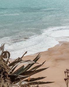 Beach Vibes - Fushion News Beach Aesthetic, Summer Aesthetic, Aesthetic Photo, Aesthetic Pictures, Brown Aesthetic, Beach Vibes, Summer Vibes, Summer Feeling, Summer Things