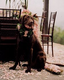 Great article from Martha that's timeless. Also.. one idea is to incorporate the color of your pet into the colors of the wedding, if it's appropriate of course. :-)