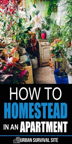 At its essence, homesteading is about self-sufficiency, and there are many ways you can increase your independence no matter where you live. Here are some ways you can begin your homesteading journey even while still living in an apartment. Urban Survival, Homestead Survival, Survival Prepping, Emergency Preparedness, Survival Skills, Survival Videos, Survival Quotes, Survival Gear, Permaculture