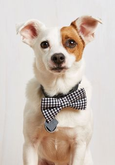 Let's Play Fetching Dog Bow Tie in Black Gingham