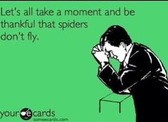Be thankful spiders can't fly #ecard #funny