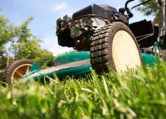 5 Tips to Crown Your Lawn King of Spring