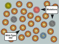 """10 Thing to Know About HIV Drug Resistance: """"Wild-Type"""" HIV is Generally the Predominant Variant At the Time of Infection. Things To Know, How To Run Longer, Drugs, Real Life, Medical, Learning, Type, Medicine"""