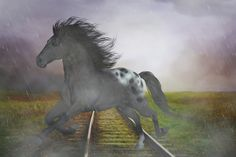 new at @Redbubble : #Horse in the #Rain #Canvas #Print - #horses