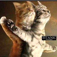 "Cat boy girl valentine sweet heart titanic funny kitty pillow cushion cover 18"""