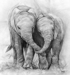 Elephants in love. Pencil drawing