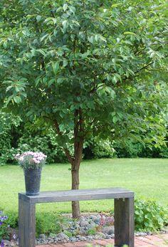 Puutarhapenkki; yksinkertainen on kaunista.