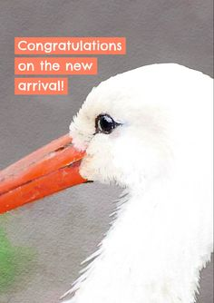 White stork close up with text 'Congratulations on the new arrival' Stork, New Parents, Card Designs, Baby Cards, Card Stock, Congratulations, Projects To Try, Greeting Cards, Baby Birth