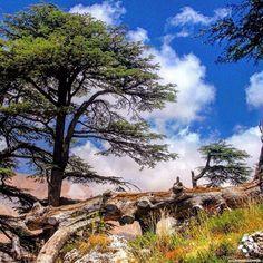 Good Morning from the #Cedars of God! By @wissamaoufan #WeAreLebanon #Lebanon…