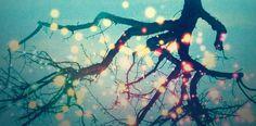 Para amantes de universos fantásticos: The Glittering World