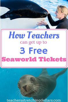 3 Free Seaworld Tickets for teachers! Elementary School Counselor, School Counseling, Elementary Schools, Summer Jobs For Teachers, New Teachers, Best Summer Vacations, Teacher Freebies, Teacher Discounts, Teacher Hacks