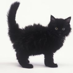 It's Friday 13th! So to counteract the bad luck, here's a black cat crossing your path. Have a great neutral day!