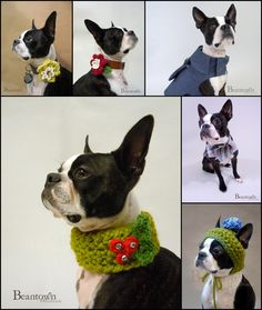 Bean Town Handmade Dog Sweaters and Hats, Pet Apparel and Accessories