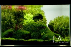 little ecospace - Just Aquascaping