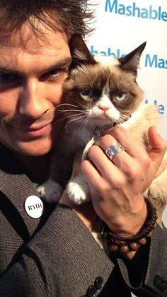 The grumpy cat blir hollywoodstjarna till jul