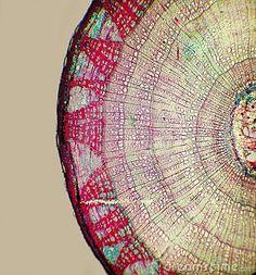 Belleza celular (mandalas biológicos)  La estética de la intimidad celular.