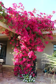40 Best and Beautiful Climbing Flowers for Fences 47 Aliexpress Buy Climbing Plants Mucuna Wisteria Pyrostegia Saplings Flowers Bamboo Fence 5 Pink Bougainvillea Great Fo. Pergola With Roof, Pergola Patio, Pergola Plans, Pergola Ideas, Pergola Kits, Covered Pergola, Wooden Pergola, White Pergola, Small Pergola