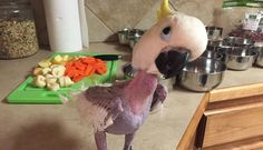 Anxious Bird Who Destroyed All Her Feathers Tells Rescuers 'I Love You'