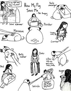 bahhumpug: How my pug sees me.