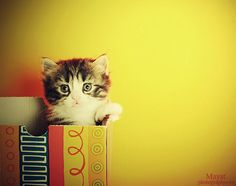 Cute Look Kitten in Cute Animals Pictures