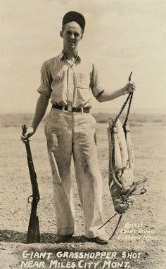 giant grasshopper / hoax / vintage