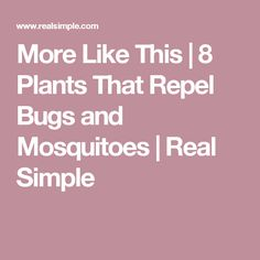 More Like This | 8 Plants That Repel Bugs and Mosquitoes  | Real Simple