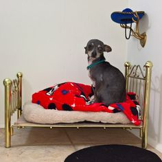 You Probably Haven't Seen Anything More Amazing Than This Chihuahua-Size Bedroom