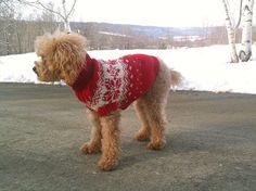 Christmas Snowflake Dog Sweater, hand knit, washable wool. $ 70.00