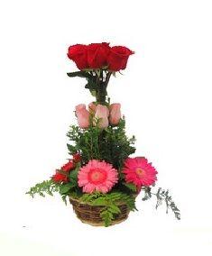 RAMO MELODIA   (Código A032)   Consta de rosas y gerbera más verde con canasta como base, disponibles en varios colores.  Valor: $ 27.990