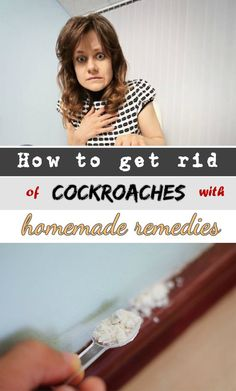 Learn how to get rid of cockroaches.