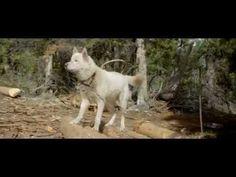 Sobreviviendo Con Lobos - Pelicula Completa (Subtitulos Español) - YouTube