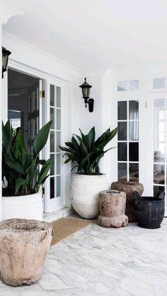 Indoor Tropical Plants, Indoor Plant Decor, Outdoor Potted Plants, Indoor Tree Plants, Best Indoor Trees, Patio Plants, Home Interior, Interior Design, Backyard Landscape Design