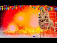 Birthday background video part 496 tamil vinotham creators - YouTube Lion Background, Green Background Video, Green Screen Video Backgrounds, Photo Background Images Hd, Blurred Background, Wedding Banner Design, Hd Happy Birthday Images, Lion Live Wallpaper, Birthday Background Design